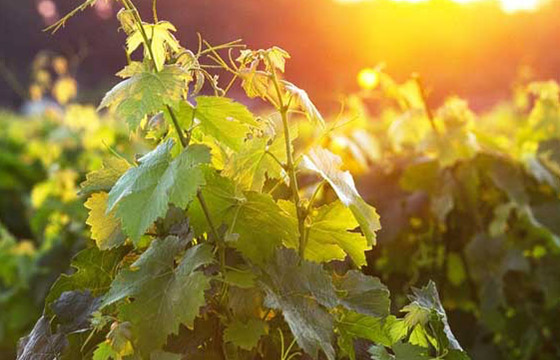 Small-scale wine-growers of Gironde